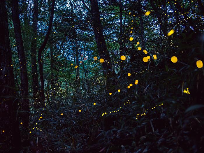 金色螢火蟲(羅生門)