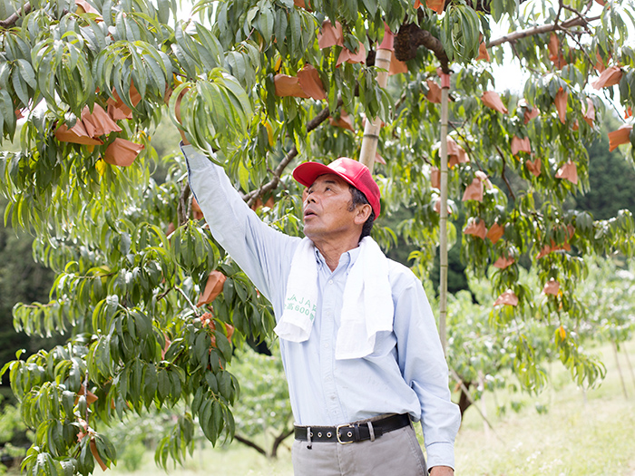 Ohara Kanko Orchard