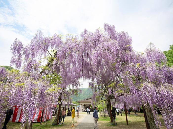 Fuji Park
